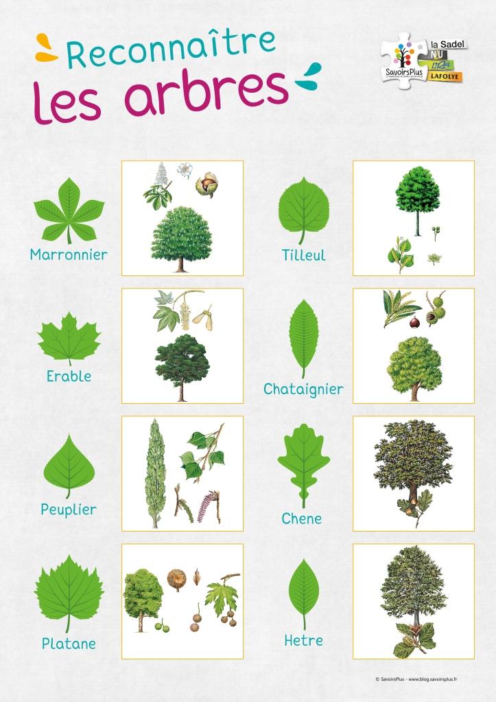 Reconnaitre les arbres_Savoirs plus